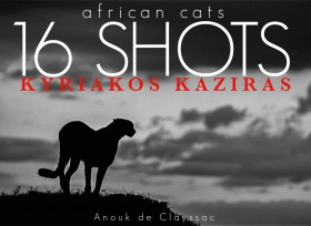 african_cats-1