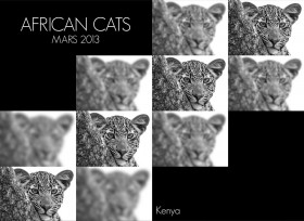 african_cats-2
