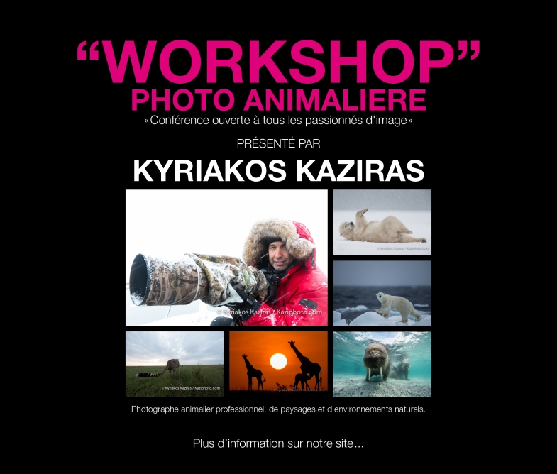 Workshop Photo animalière Nantes