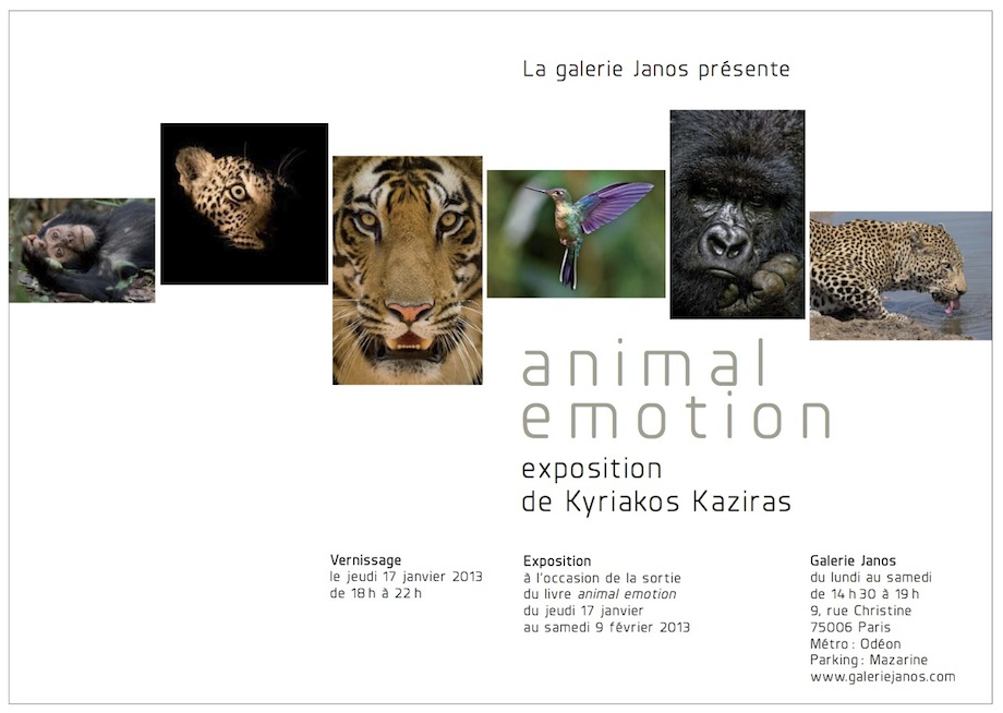 Exposition Animal Emotion à la Galerie Janos